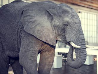 de olifant in de kamer